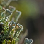 Lichen Green – Fall Winter 2013 colour trend
