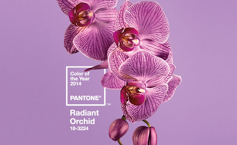 Radiant Orchid – Colour of year 2014